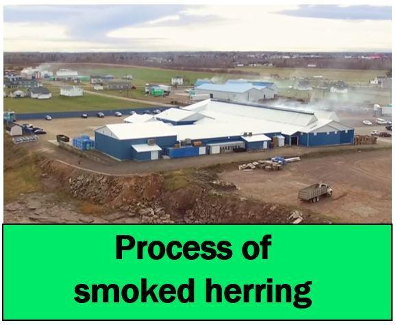 Process of smoked herring photo pour vidéo